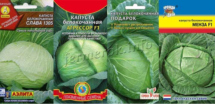 Фото сортов капусты для засолки: Слава, Агрессор Ф1, Подарок, Менза Ф1