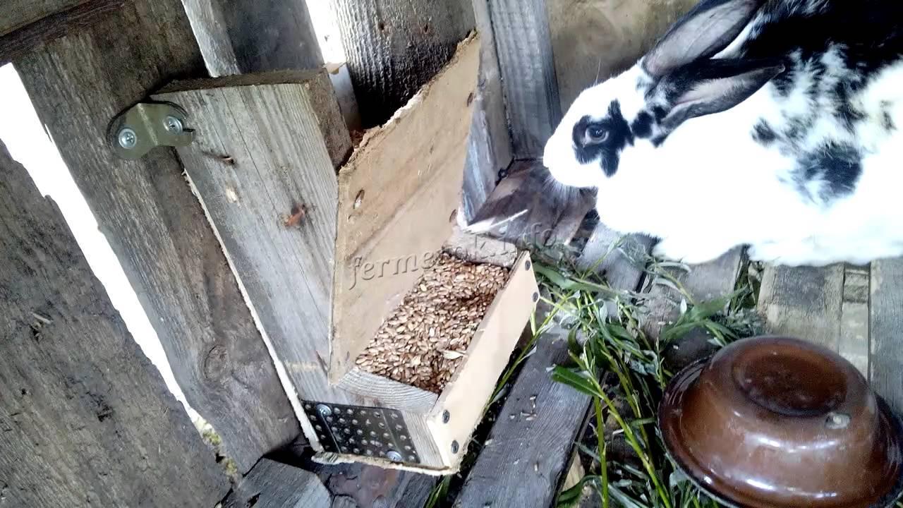 Кролик у кормушки
