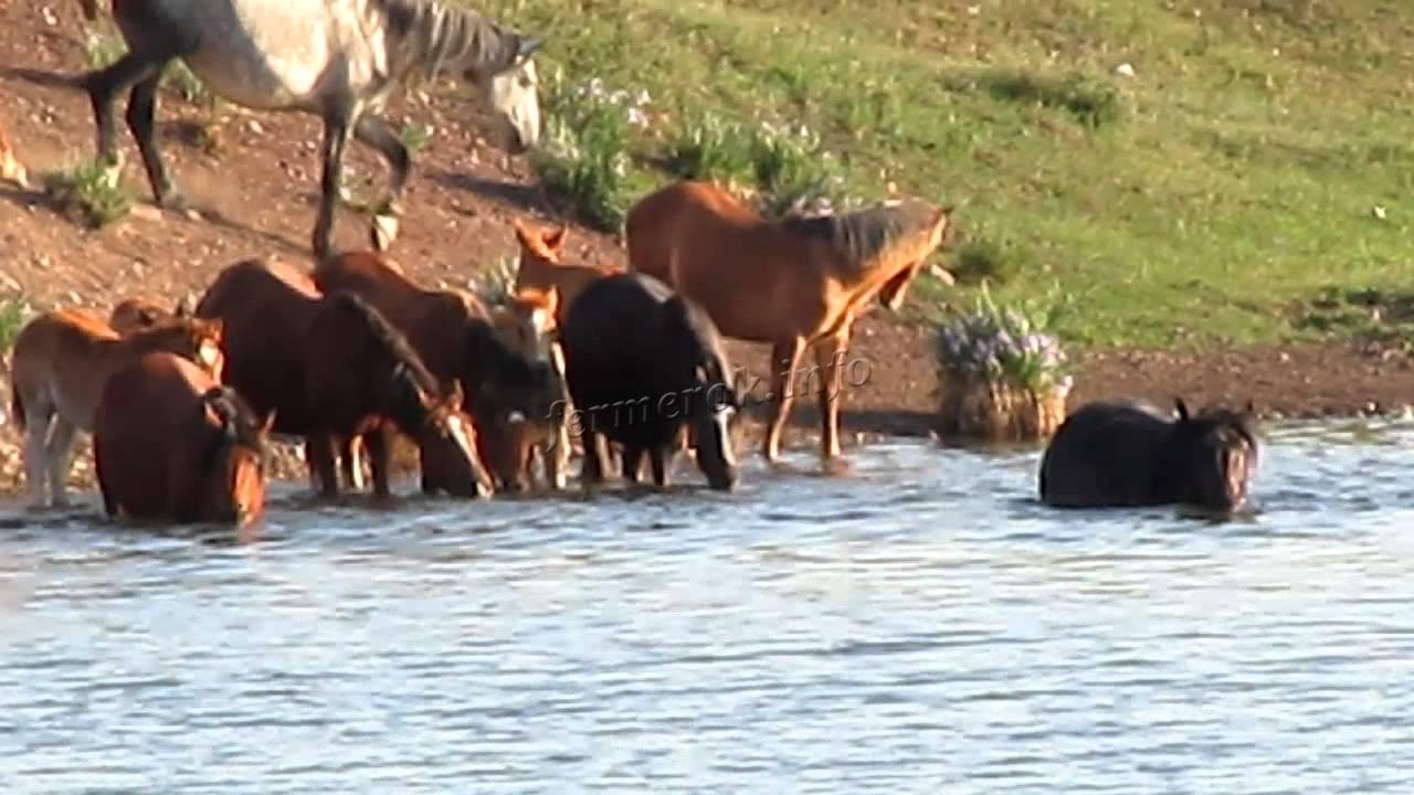 Вода для лошади