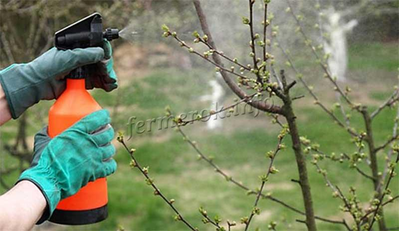 Обработка деревьев и кустарников