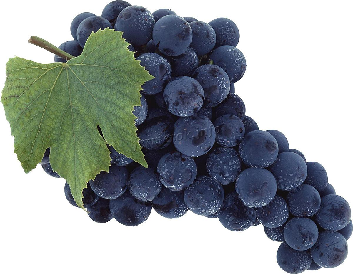 Виноград Изабелла столово-технический гибрид