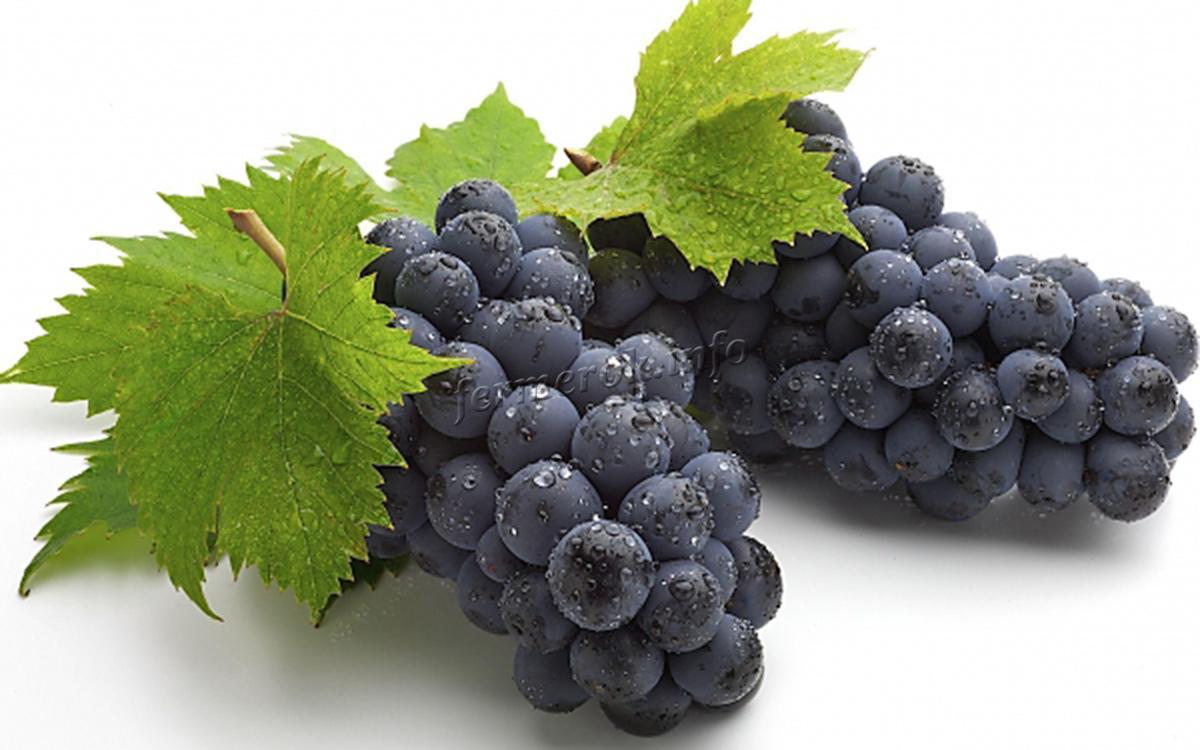 Польза и вред винограда Изабелла