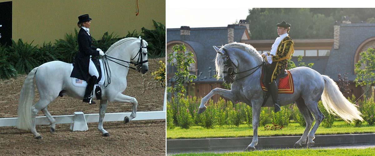 Использование Андалузской лошади