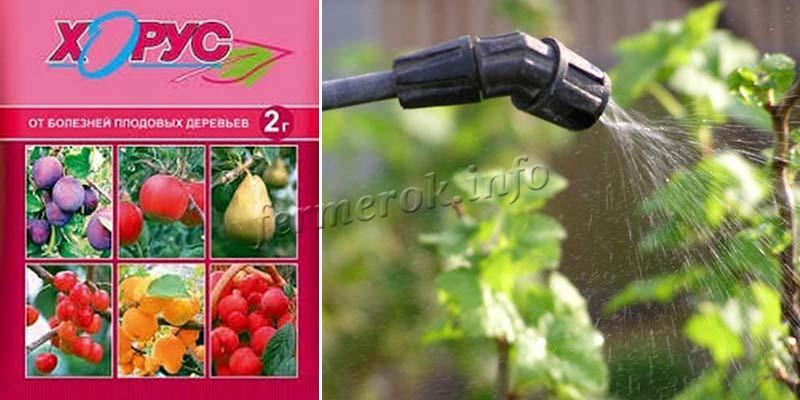 Фунгицид Хорус для винограда