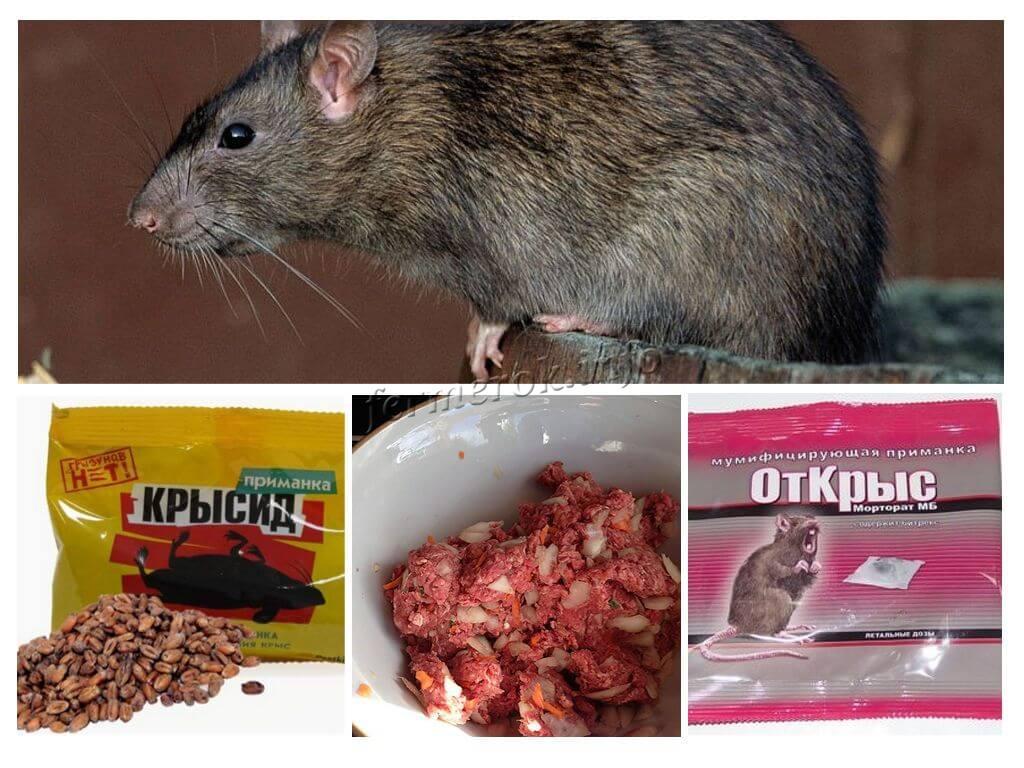 Химические препараты для борьбы с крысами