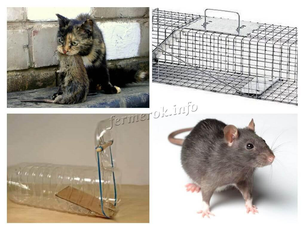 Механические ловушки для крыс