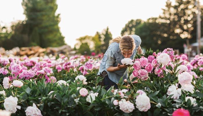 Фото красивых цветущих пионов