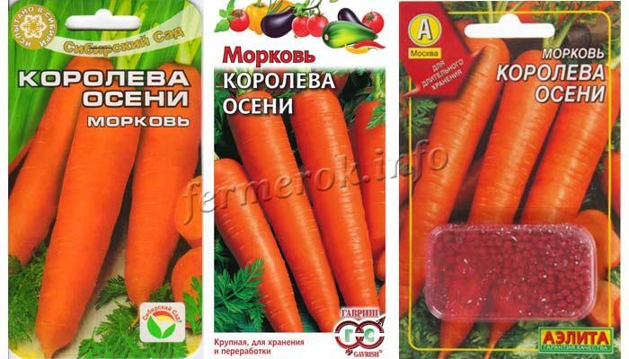 Фото семена моркови Королева осени