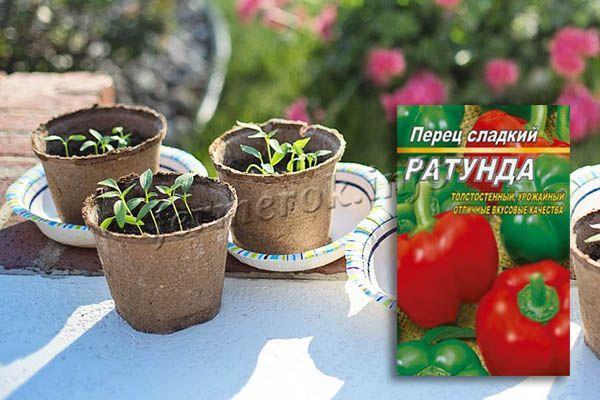 Выращивать Ратунду проще всего через рассаду