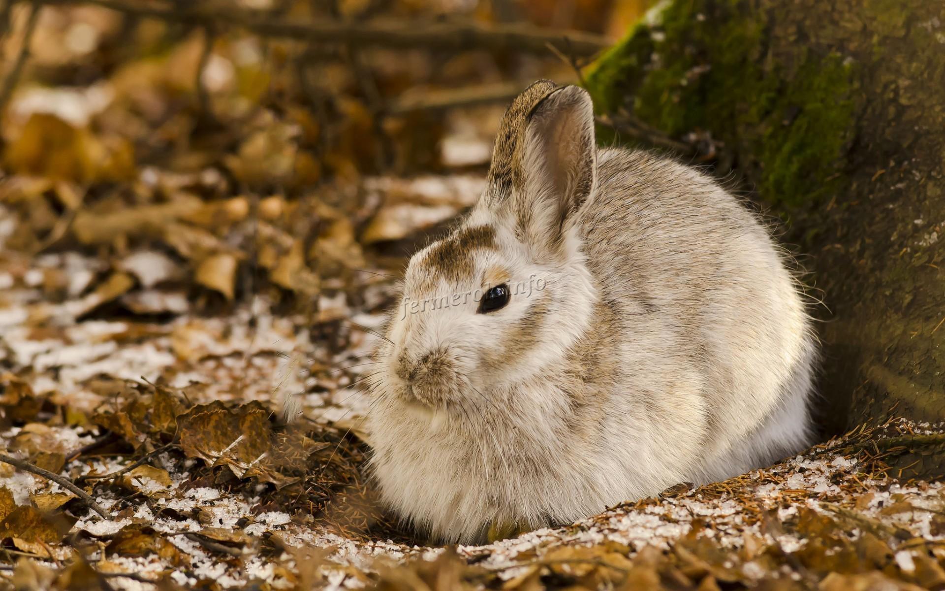 Сколько живут дикие кролики?