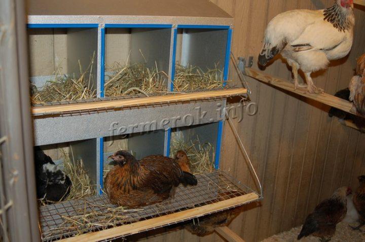 Размеры гнезда для кур несушек