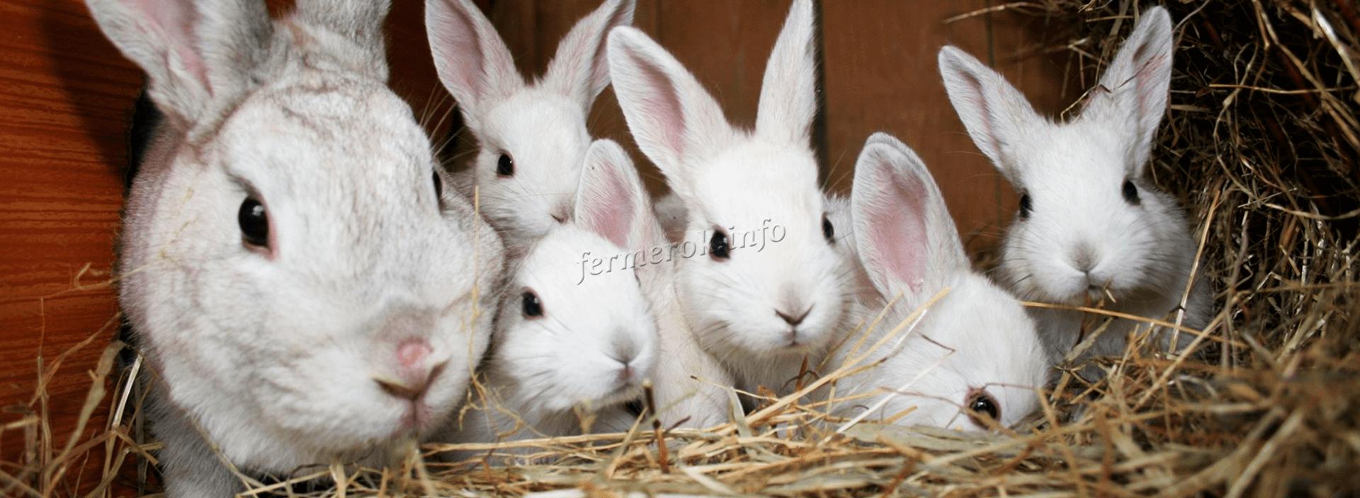 Сколько живут кролики для разведения?
