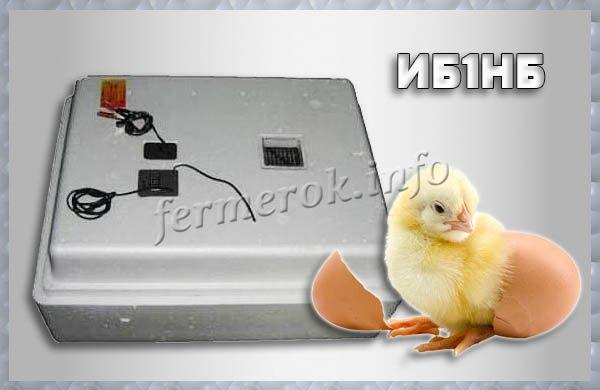 Фото инкубатора модели ИБ1НБ