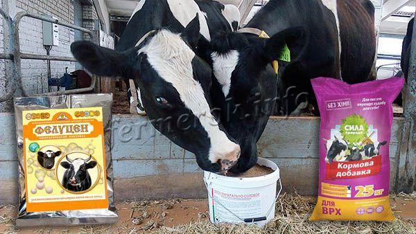 Кормовые добавки положительно влияют на повышение массы тела бычков