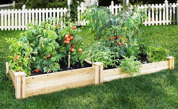 На второй год можно посадить томаты, капусту, огурцы, кабачки