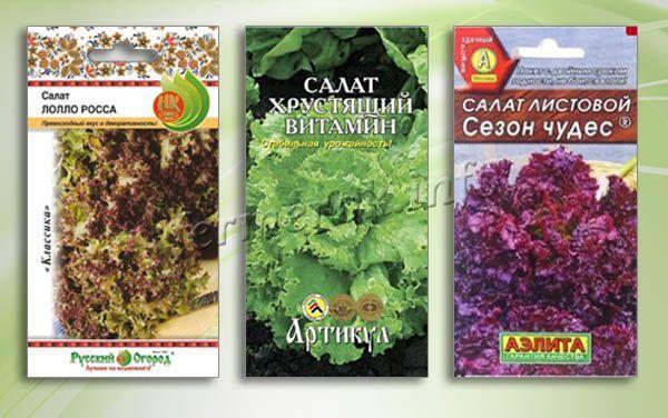Сорта листовых салатов
