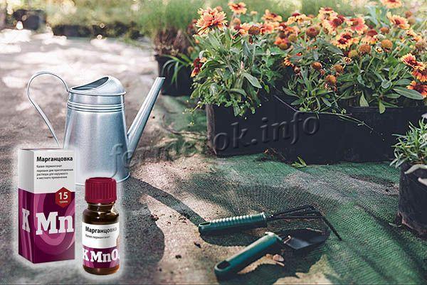 раствором марганцовки можно поливать цветы