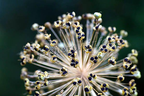 Ранней весной, когда земля прогреется до +5 градусов, можно посеять семена