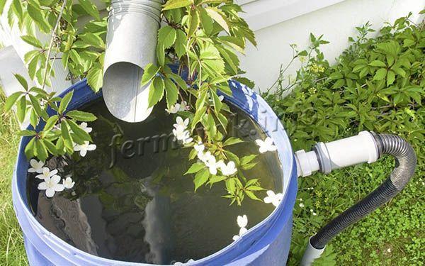 Идеальный вариант для полива рассады – талая или дождевая вода