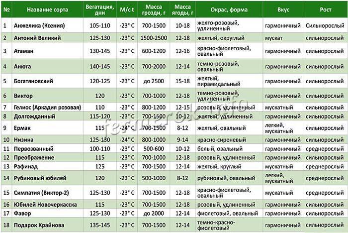 Лучшие сорта винограда В. Крайнова
