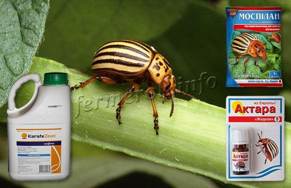 От вредителей рекомендуется использовать такие препараты как «Моспилан», «Актара», «Каратэ Зеон»