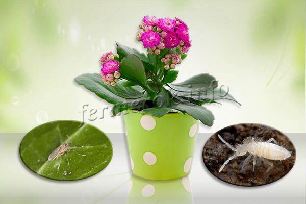 Мошки в цветочных горшках- как избавиться народными средствами, средство от мошек