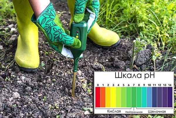 Высокая кислотность грунта наблюдается при чрезмерном удобрении