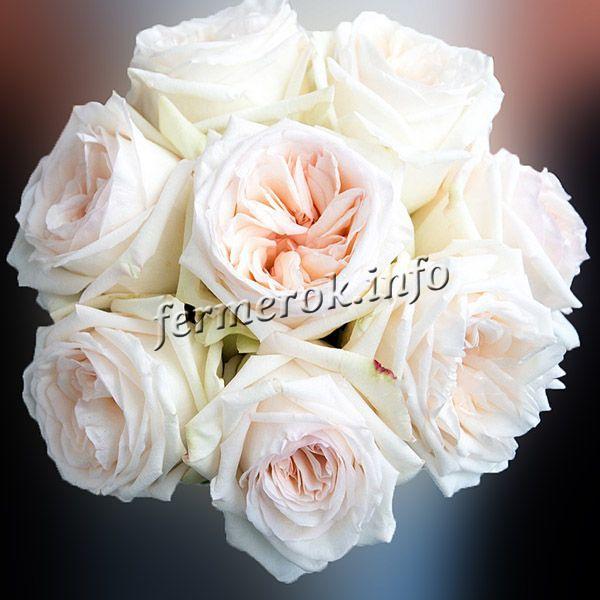 Фото розы флорибунда сорта Вайт Букет