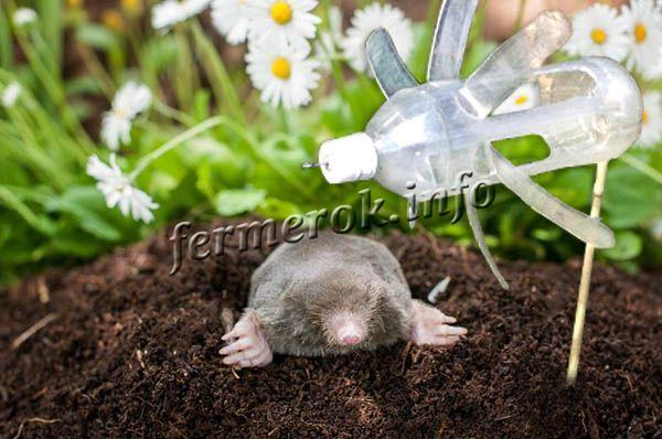 Если поставить на огороде вертушку, она будет издавать неприятный звук и прогонит кротов