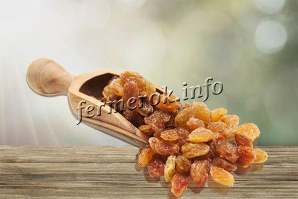 Изюм, сделанный из этого винограда, имеет превосходный вкус и долго хранится