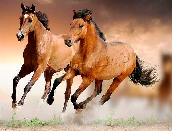 Ахалтекинская лошадь двигается грациозно, шаг, аллюр, галоп высокий, текучий и плавный