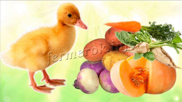 Богаты на витамины овощи для утят