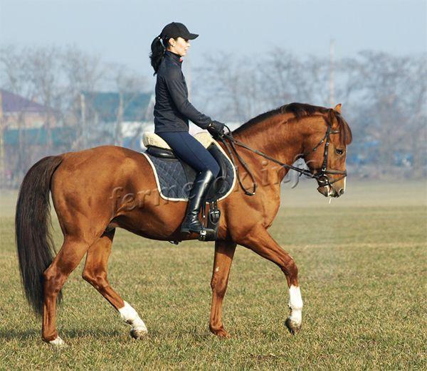 Буденовцы неплохо себя зарекомендовали в разных видах конного спорта