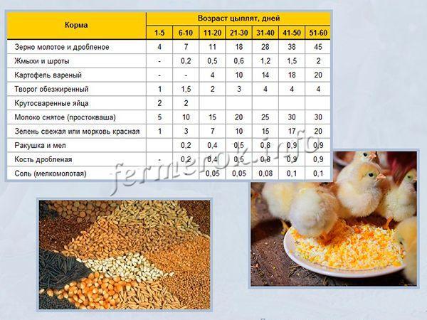Чем кормить месячных цыплят