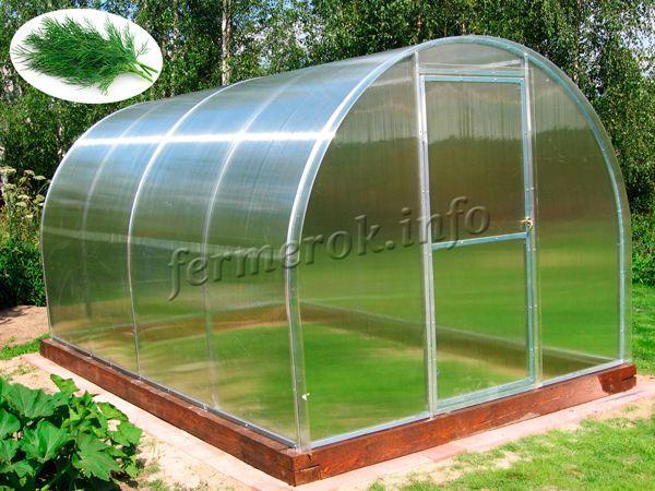 Дачная теплица для выращивания зелени