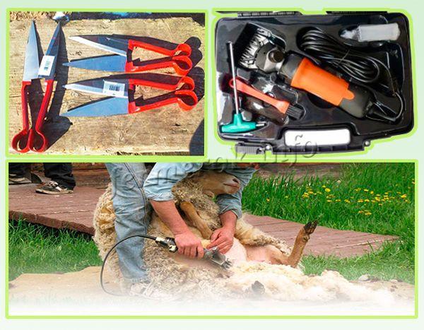 Для проведения стрижки овец нужно время, мастерство и инструменты