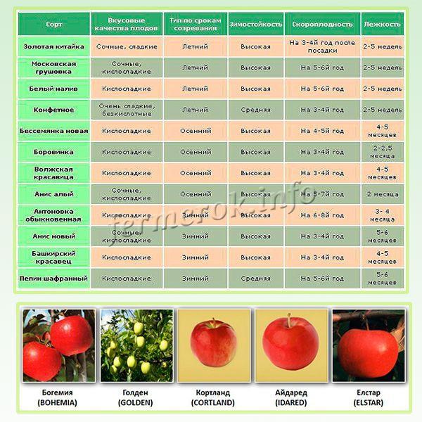Характеристики сортов яблонь
