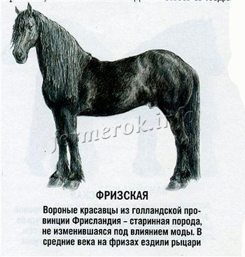 К 1913 году осталось всего 3 чистокровные лошади