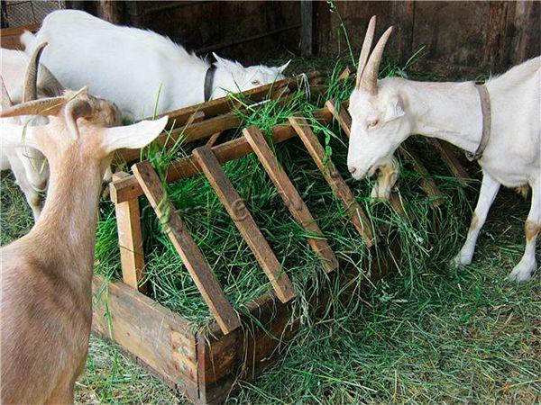 Кормушка для коз под траву