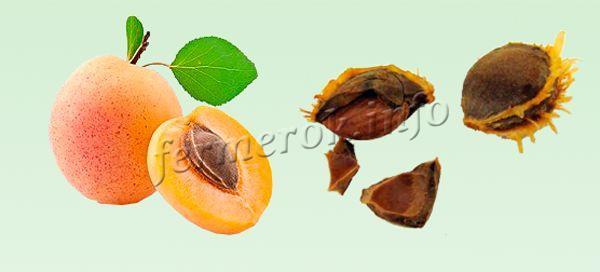 Косточки отбираются из переспевших плодов