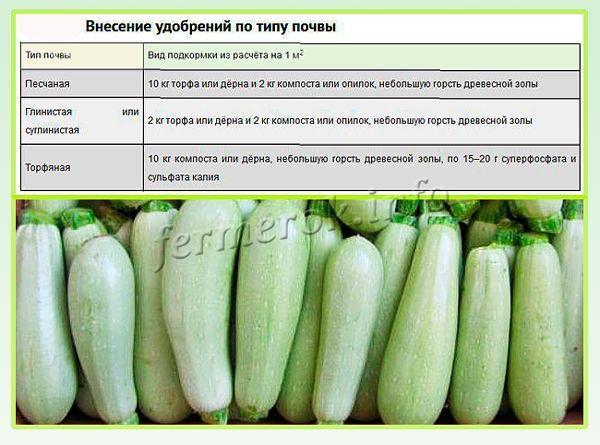 Лучше всего кабачок Искандер F1 растет на легкой плодородной почве с низкой или умеренной кислотностью