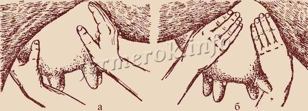 Массаж вымени перед доением