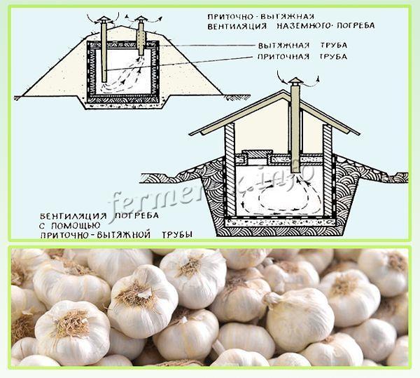 Необходима налаженная система вентиляции, чтобы урожай не прел