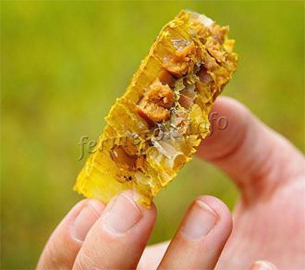 Перга пчелиная на 95-100% усваивается организмом человека