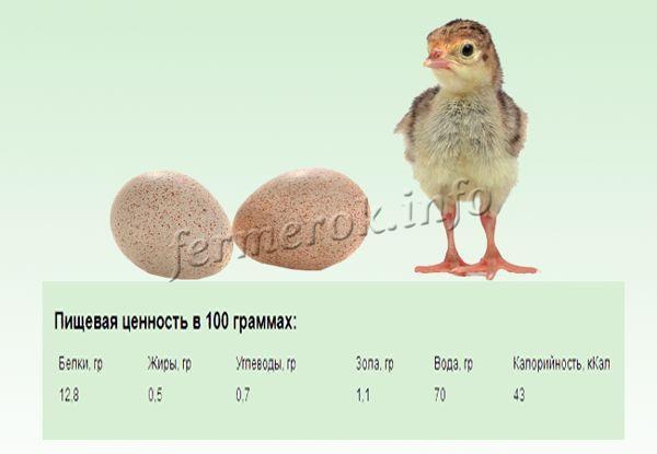 Пищевая ценность яиц цесарок
