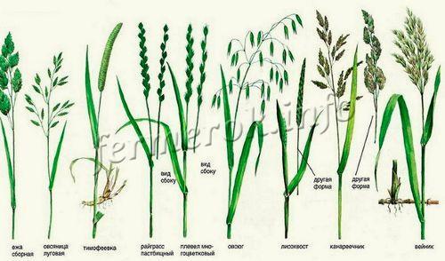 Полезные растения в рационе-питания индюков