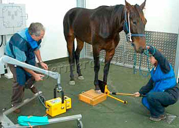 После приобретения коней, стоит побеспокоиться и о персонале