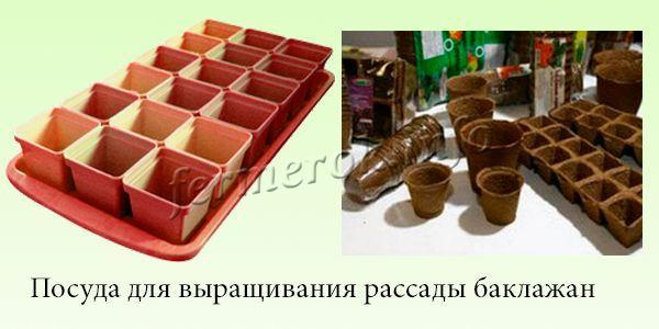 Посуда для выращивания рассады баклажан