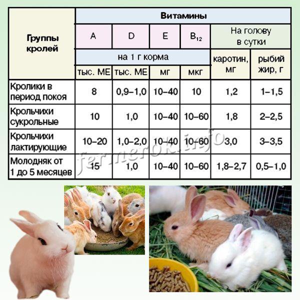 Потребность кролей в витаминах в сутки