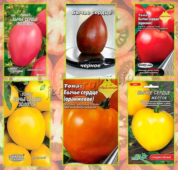 Разновидности томатов сорта Бычье сердце